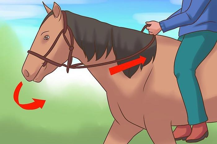 поворот на лошади