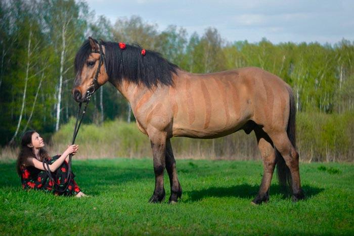 девочка и конь