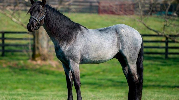 Чалая масть лошади: фото и описание