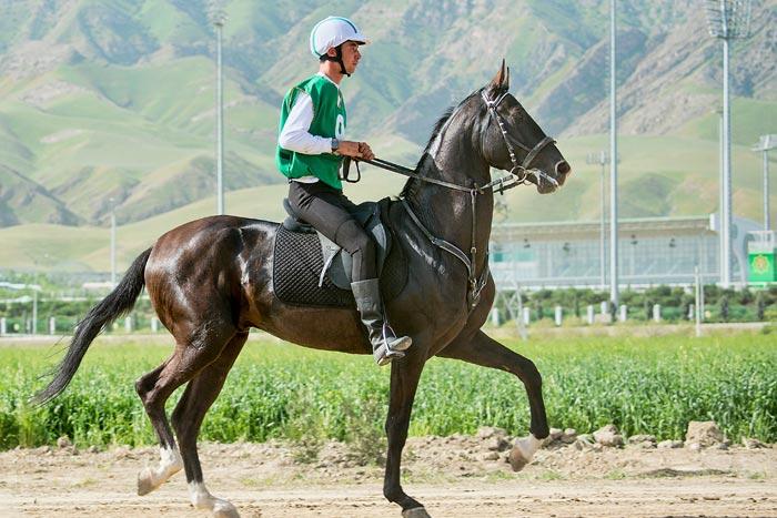 туркменская лошадь