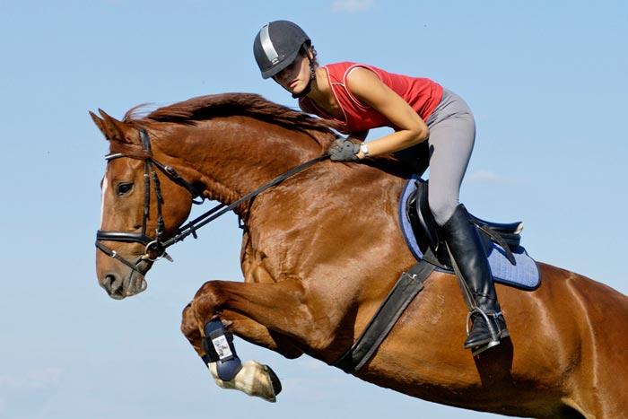 Спортивная лошадь