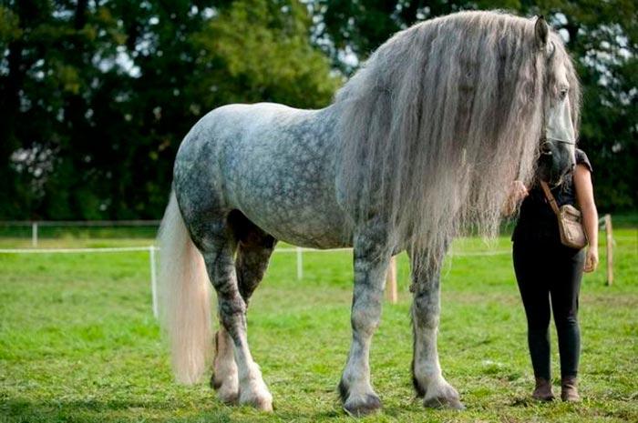 пышная грива у коня