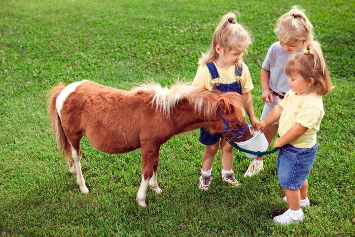 дети кормят пони