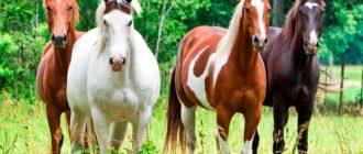 лошади разных пород