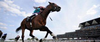 самая дорогая спортивная лошадь френкель