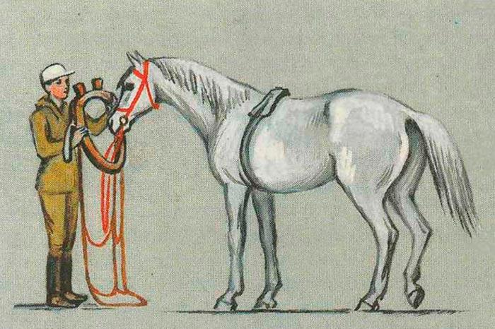 запряжка коня