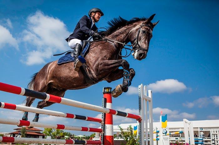 лошадь скачет через барьер