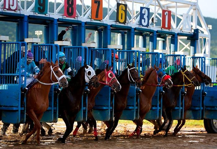 кони на старте