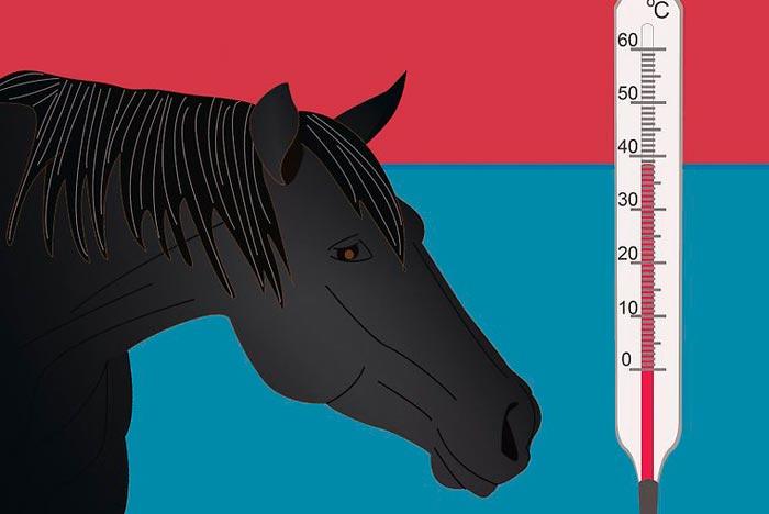 лошадь и термометр