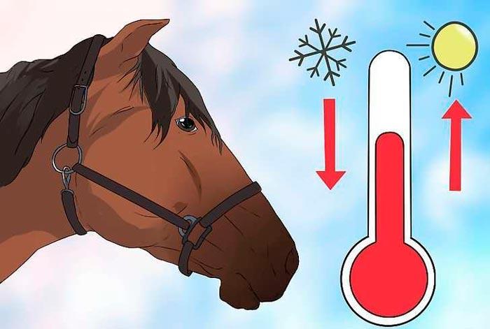 перепады температур для лошади