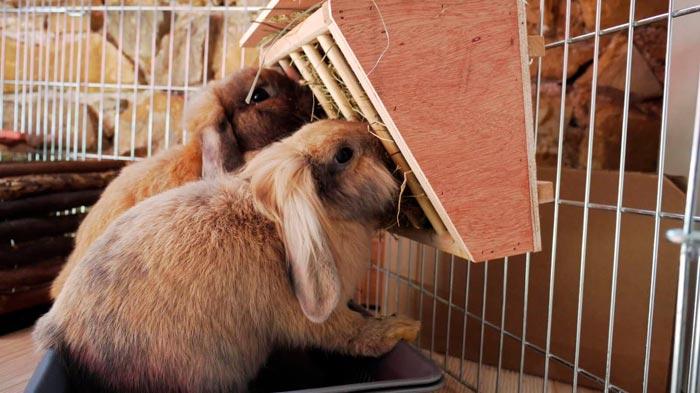 кролики едят из кормушки