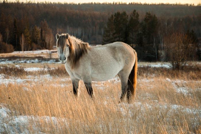 якутская северная