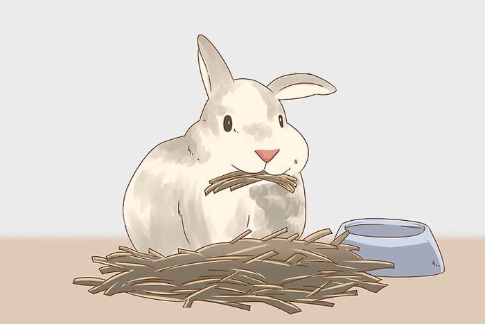кормление крольчихи