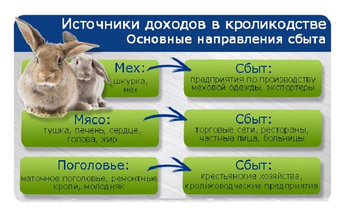 схема доходов и сбыта в кролиководстве