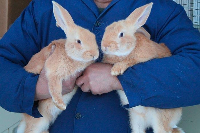 кролики в руках