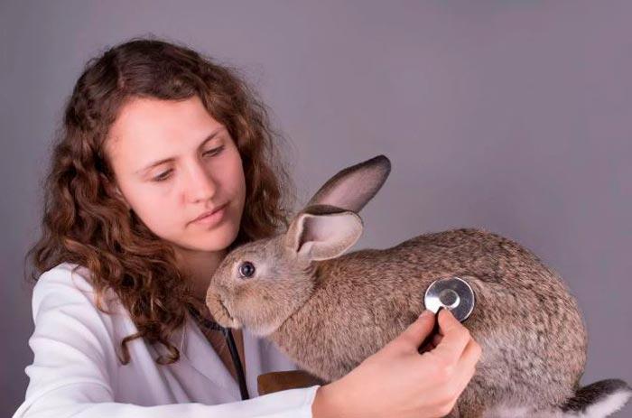 ветеринар и кролик