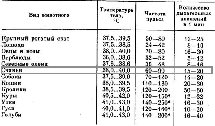 норма температуры у свиней