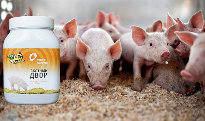 бактерии для подстилки свиней