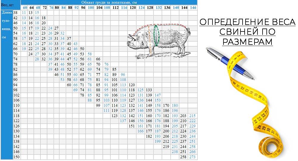 таблица определения веса свиней