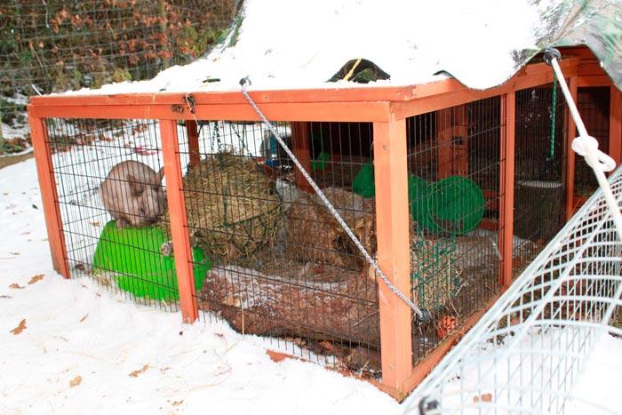 зимовка кроликов
