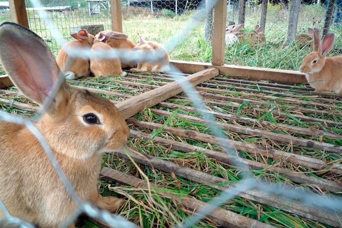 кролики на ферме
