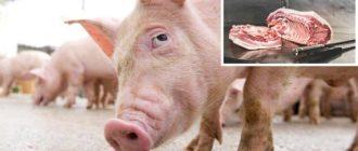 свинья на забой