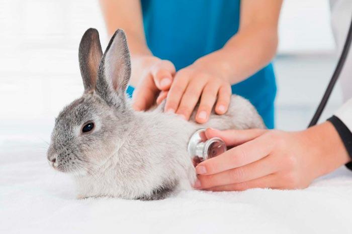 ветеринар с кролем