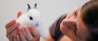 рассматривает кролика
