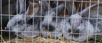 кролики едят сено
