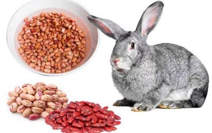 кролик и фасоль