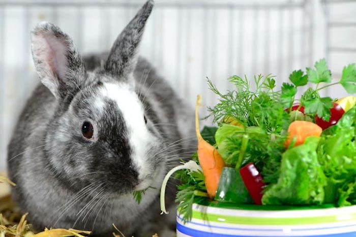 кролик и овощи