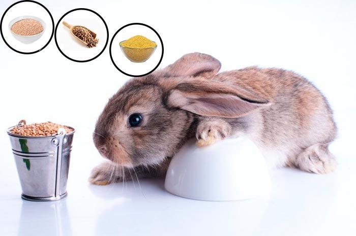 кролик и крупы