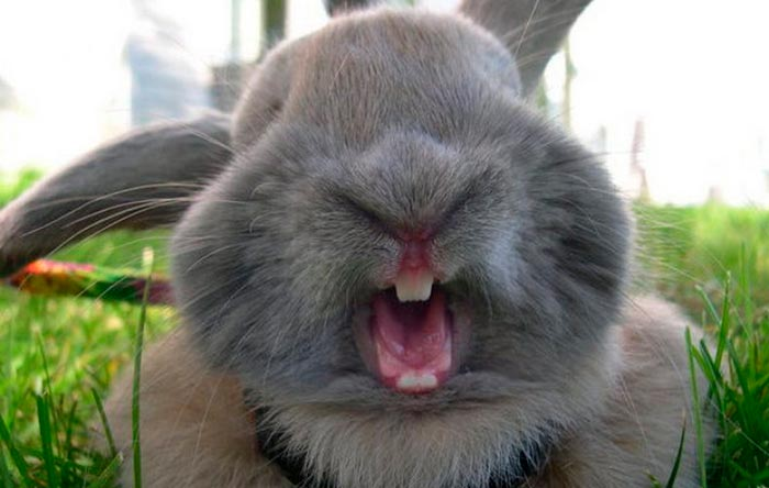 кролик кусается
