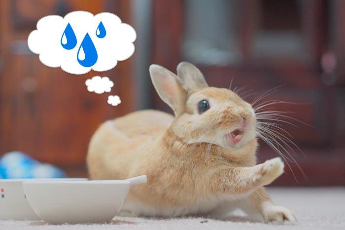 кролик хочет пить
