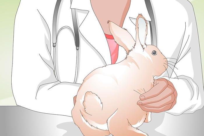 осмотр кролика