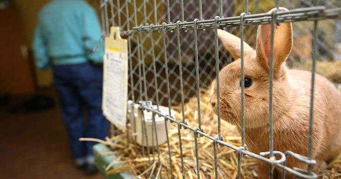 крольчонок в клетке