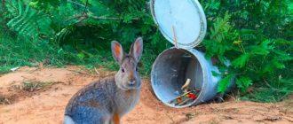 ловля кролика