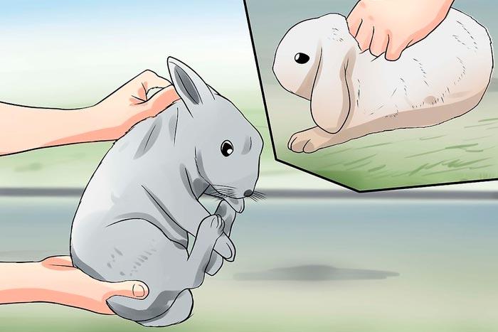 Пойманный кролик
