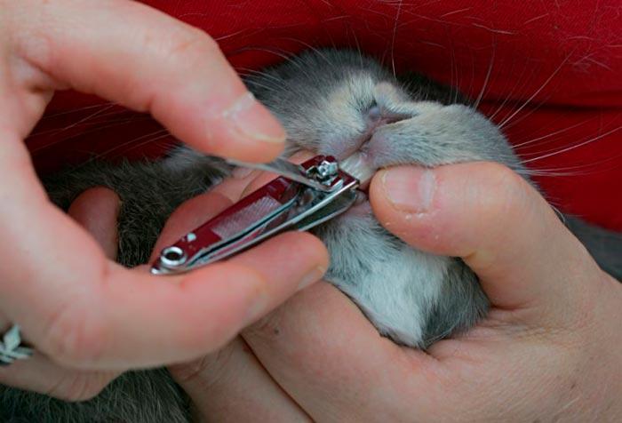 реставрация зуба кролика