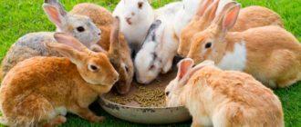 кролики едят корм