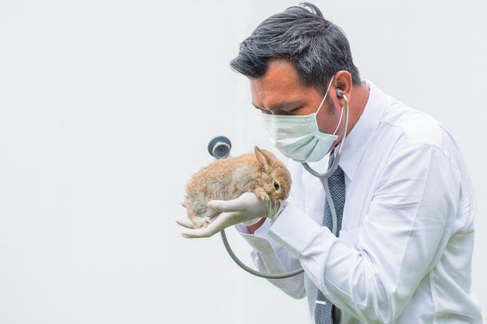 кролик в руках у ветеринара