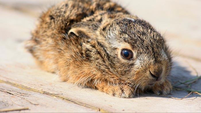 испуганный кролик