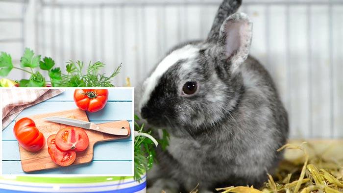 томаты для кролика