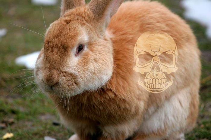 Почему дохнут кролики зимой, от чего умирают кролики (фото и видео)