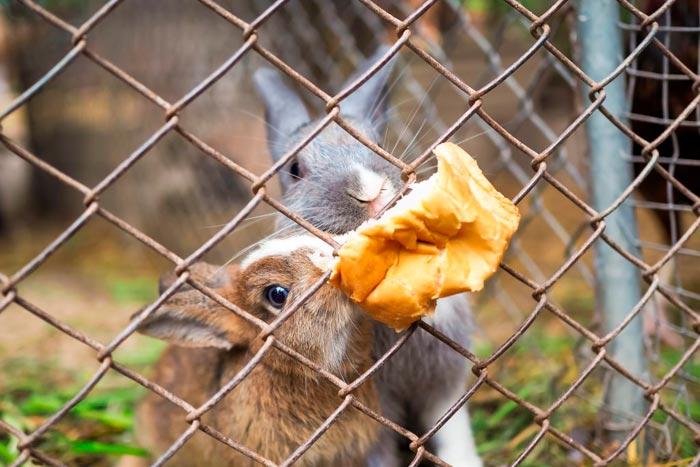 Можно кормить хлебом кроликов - Оappendicite