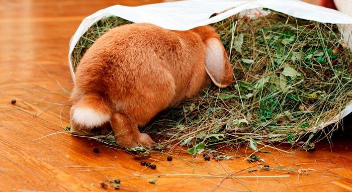 кролик и сено