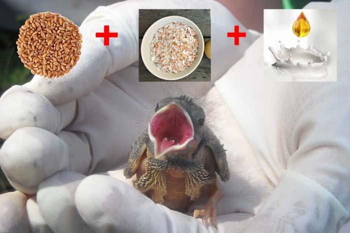 кормит птенца