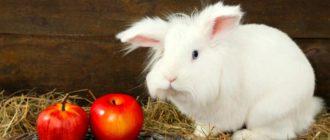 кролик и яблоки