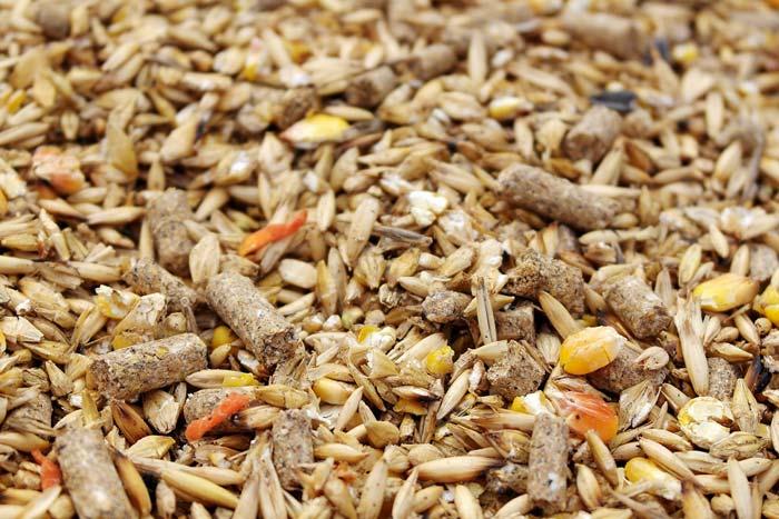 зерно для уток
